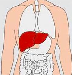 腰痛,原因,症状,筋肉,病気2